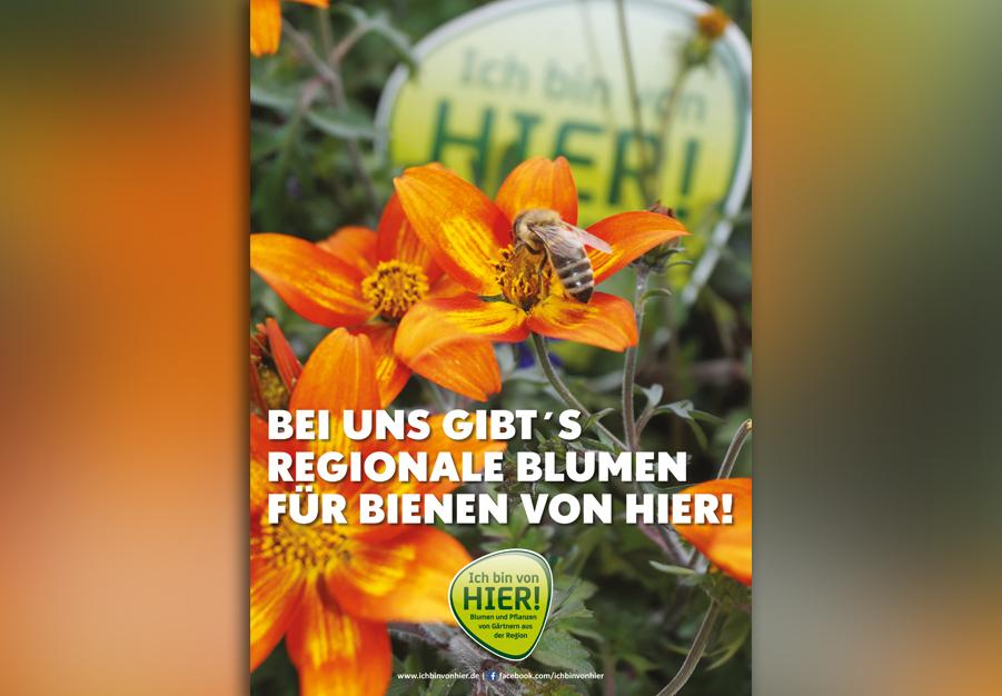 Neues Bienenplakat im Marktbüro
